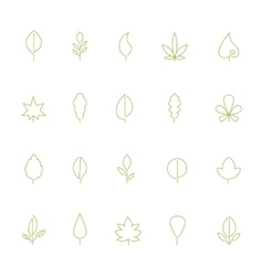 Thin contour icons leaves vector image vector image