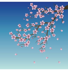 Branch of Sakura over Sky vector image