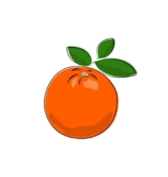 Citrus Orange Isolated on White vector image