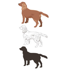 Cocker spaniel in three different styles isolated vector