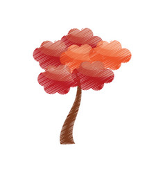 drawing sakura tree japan vector image