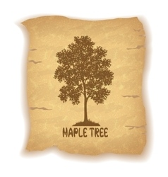 Maple Tree on Old Paper vector image