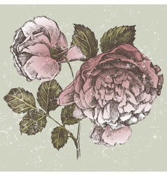 old style roses vector image vector image