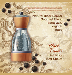 promo banner of black pepper natural spice vector image