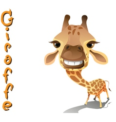Animal giraffe vector