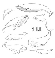 Set of different whales vector