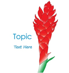 The of Galangal Flower vector