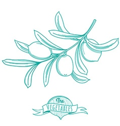 Outline hand drawn sketch of olive flat style thin vector image vector image