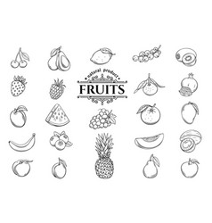 Hand drawn fruits icons set vector