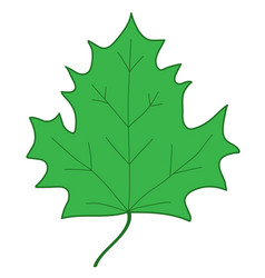 maple leaf green sign 107 vector image