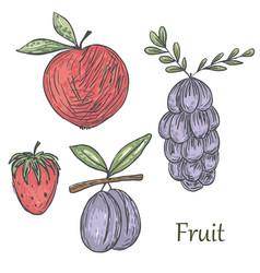 summerfruit vector image