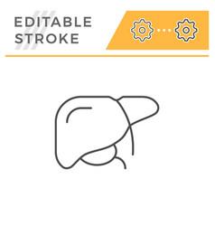 liver line icon vector image