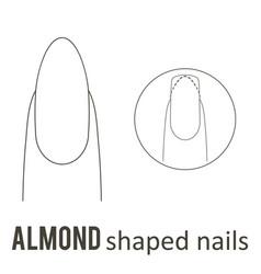 Nail shape almond vector