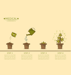 Cannabis plant growing step vector
