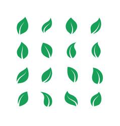 flat leaves set green simple forest leaf herbal vector image