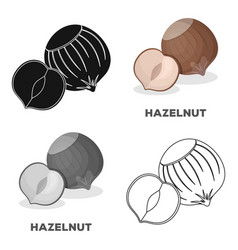 Hazelnuts in shelldifferent kinds of nuts single vector