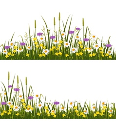 Wild flower meadow vector