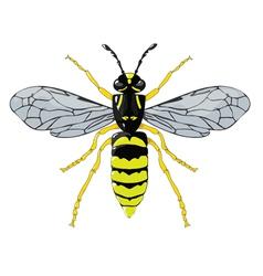 Wasp vector image vector image