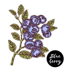 hand drawn color sketch berries ripe blueberry vector image vector image