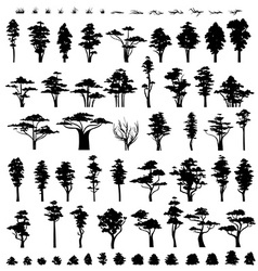 Nature trees Trees silhouettes isolated on white vector image vector image