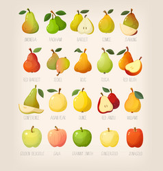 big variety of pears with names vector image