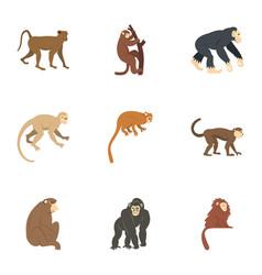 Jungle monkey icon set flat style vector