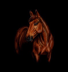 Portrait of the horse on the black background vector