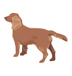 cocker spaniel isolated on white background vector image