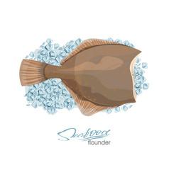 olive flounder sea fish vector image