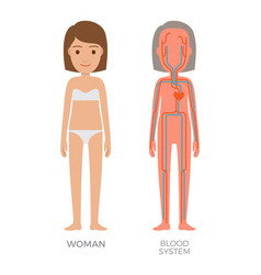 Blood woman system educational vector
