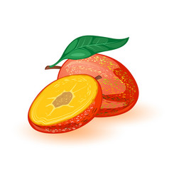 Sweet ripe mango whole and half tropical exotic vector