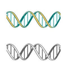 Set of two DNA symbols on white background vector image vector image