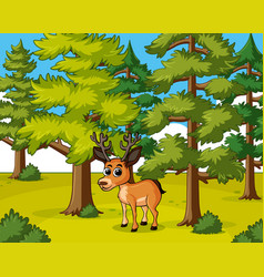 Deer living in the forest vector