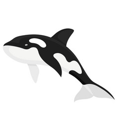 Killer whale fish vector