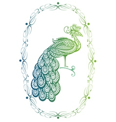Peacock in a frame On White Background vector image