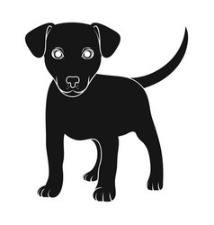 puppy labradoranimals single icon in black style vector image