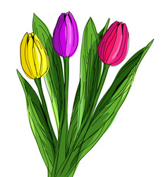 Three hand drawn red purple and yellow tulips vector