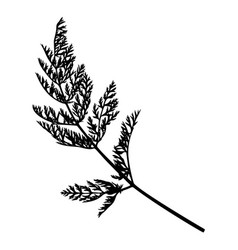 wild herb silhouette isolated on white vector image