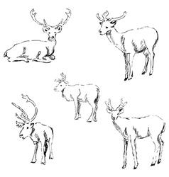 Deer sketch Pencil drawing by hand vector image