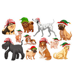 dogs with christmas hats vector image