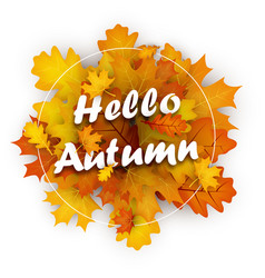 hello autumn card with orange leaves vector image