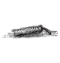 Larva of woolen moth walking vintage vector