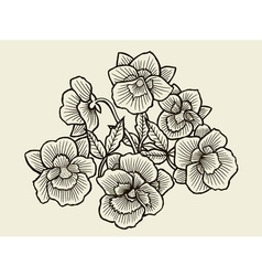 Orchid flower blossom vector image