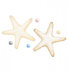 starfish and pearls vector image