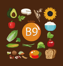 Vitamin b9 folate vector