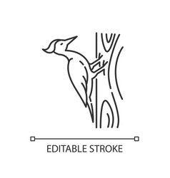 Woodpecker pixel perfect linear icon vector