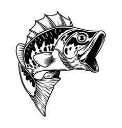 bass fish big perch perch fishing design element vector image