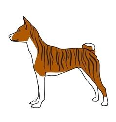 Brindle basenji dog standing vector