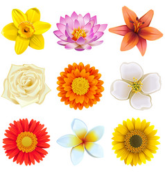 Flower icons set 2 vector