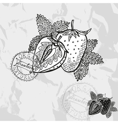 Hand drawn decorative strawberries vector image